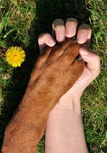 Surrogate Tapping for Pets
